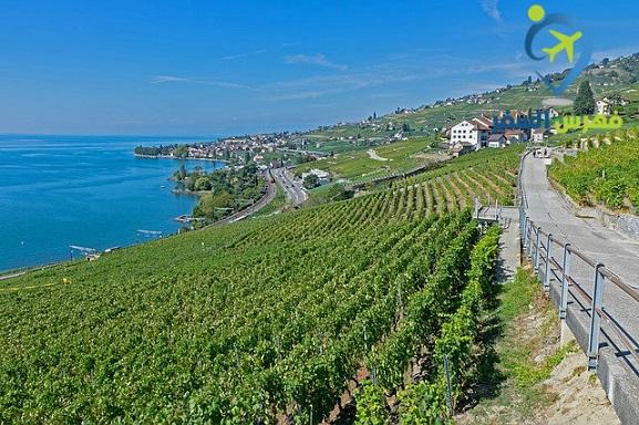 مميزات الدراسة في سويسرا .. عالم مدهش وهدوء حتى الملل !!!