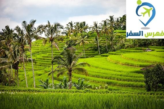 دليل السياحة في جزيرة بالي