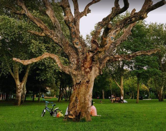 حدائق اتاتورك فلوريا في اسطنبول